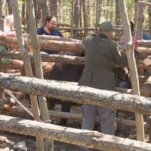 Inspekcija na obroncima Velebita (Foto: Dnevnik.hr) - 1