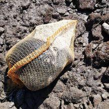 Na porečkoj plaži pronađen mrtav psić u vreći za krumpire (Foto: Facebook/Dnevna dora Porečana) - 1