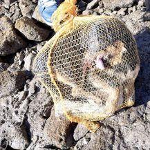 Na porečkoj plaži pronađen mrtav psić u vreći za krumpire (Foto: Facebook/Dnevna dora Porečana) - 2
