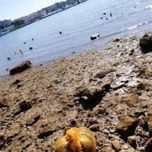 Na porečkoj plaži pronađen mrtav psić u vreći za krumpire (Foto: Facebook/Dnevna dora Porečana) - 3