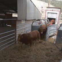 Iživljavanje na životinjama u istarskoj Luci Raša (Foto: Provjereno) - 2