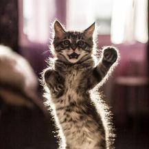 Rasplesane mačke (Foto: boredpanda.com) - 1