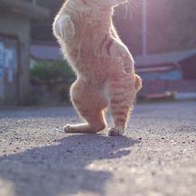 Rasplesane mačke (Foto: boredpanda.com) - 3