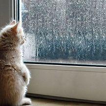 Nestrpljivi ljubimci (Foto: brightside.me) - 1