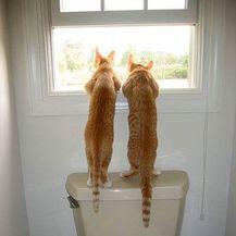 Nestrpljivi ljubimci (Foto: brightside.me) - 5