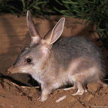 Australske životinje (Foto: brightside.me) - 3