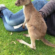 Australske životinje (Foto: brightside.me) - 4