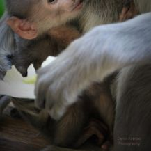 Prinova u zagrebačkom Zoološkom vrtu