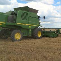 Proizvodimo pšenicu, uvozimo kruh (Foto: Dnevnik.hr) - 1