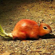 Biljke i životinje (Foto: daniloco) - 20