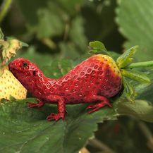 Biljke i životinje (Foto: daniloco) - 28
