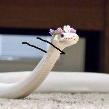 Šašava zmije (Foto: boredpanda.com) - 24