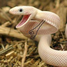 Šašava zmije (Foto: boredpanda.com) - 25