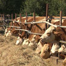 Manji PDV na mliječne prerađevine? (Foto: Dnevnik.hr) - 3