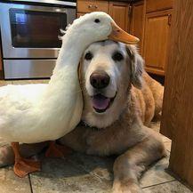 Pravo prijateljstvo (Foto: brightside.me) - 13