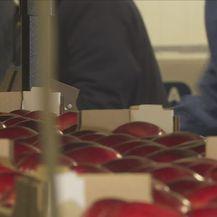 Branje i prodaja voća (Foto: Dnevnik.hr)