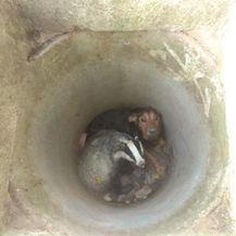 Spasili psa i jazavca iz šahta (Foto: Domagoj Rast/Faun Kutina)