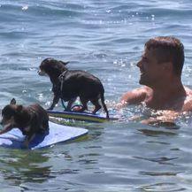 Psi surfaju (Foto: Dnevnik.hr)