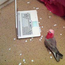 Ptice (Foto: boredpanda.com) - 37