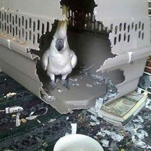 Ptice (Foto: boredpanda.com) - 38