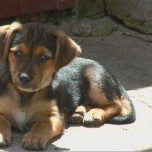 Odbačeni pas (Foto: Dnevnik.hr)
