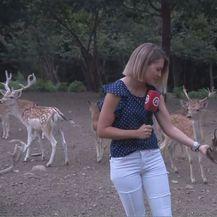 Reporterka Katarina Jusić s jelenom (Foto: Dnevnik.hr)
