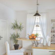 Ukrasno sobno bilje izgleda vrlo efektno i u kuhinji - 9