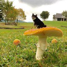 Bitna je perspektiva (Foto: thechive.com) - 18