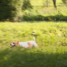 Nika Fleiss sa svojim psima - 11