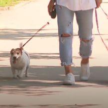 Nika Fleiss sa svojim psima - 12
