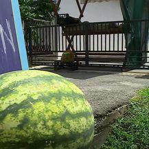Samoposlužni štand s lubenicama - 1