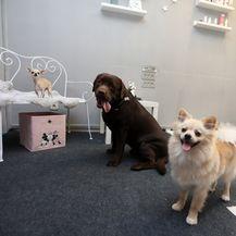 Na Zametu u Rijeci otvoren je vrtić za pse Dog Bar - 6
