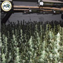 Laboratorij za proizvodnju marihuane u Zelini (Foto: PU Zagrebačka)