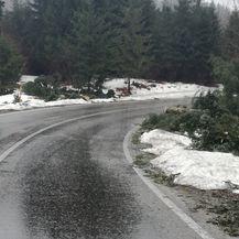 Srušena stabla u Gorskom kotaru (Foto: Marko Balen)