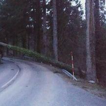 Srušena stabla u Gorskom kotaru (Foto: Antonio Đaković)