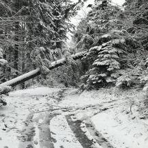 Zbog srušenih stabala neprohodne lokalne ceste (Foto: dnevnik.hr)