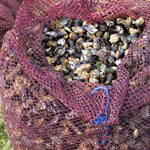 Do patki školjki nije lako doći u Portugalu i Španjolskoj