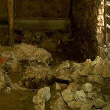 Stampedo ovca (Foto: Dnevnik.hr) - 2