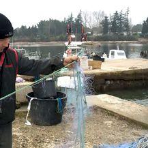Ribar Savudrijske uvale Marko Fusić drži oštećenu mrežu za ribu (Foto: Dnevnik.hr)