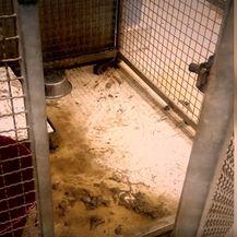 Stanje u azilu Dumovec - 2