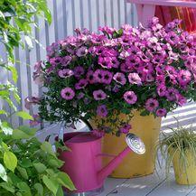 Cvijeće koje se sadi u proljeće - 12
