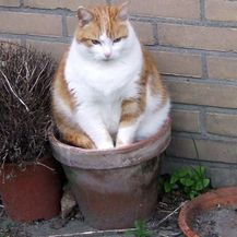 Mačke biljke (Foto: brightside.me) - 17