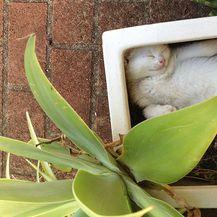 Mačke biljke (Foto: brightside.me) - 19