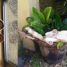 Mačke biljke (Foto: brightside.me)
