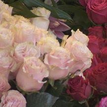 Ruže (Foto: Dnevnik.hr)
