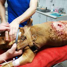Mladić u Puli usred bijela dana psa izbo nožem (Foto: Glas Istre)