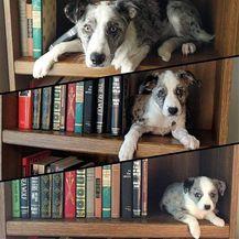 Kad psi porastu (Foto: izismile.com) - 19