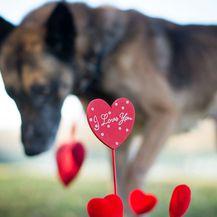 Alphi će trebati kućna njega i sva moguća pomoć, pažnja, ljubav i toplina
