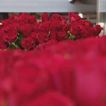Ruže, ilustracija