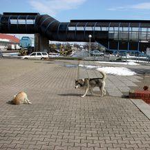 Psi lutalice, arhiva (Foto: Franjo Lepan/PIXSELL)